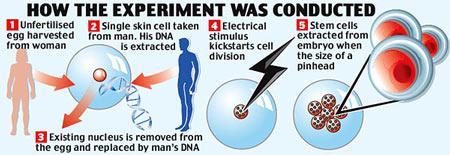美科学家用自身皮肤细胞克隆出人类胚胎(图)