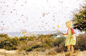 全球变暖可能致害虫数量剧增威胁庄稼