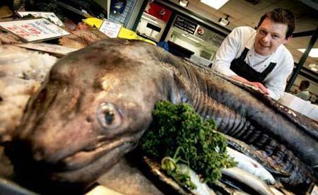 英国捕获奇异鳗鱼长2米重76公斤(图)