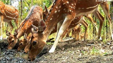 印度大象携摄像机森林中拍到奇趣动物画面