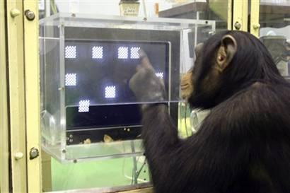 世界十种最聪明动物:人类位居首位(组图)