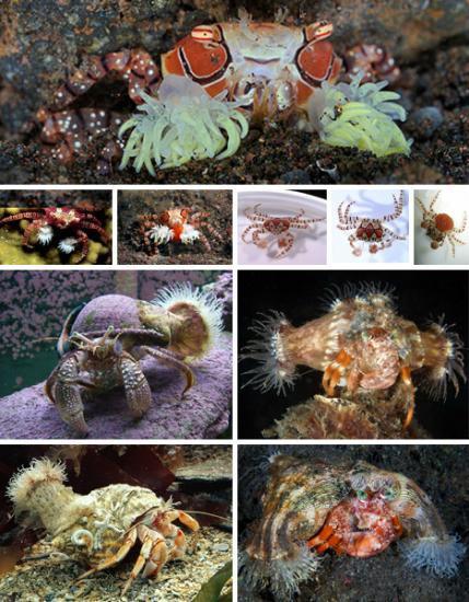 海洋七大共生奇观:小虾为电鳗清洁口腔(图)