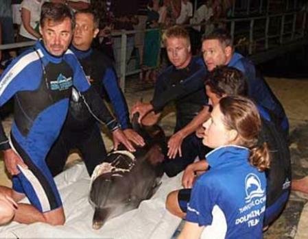 海豚守护被鲨鱼咬伤同伴3天直至获救(图)