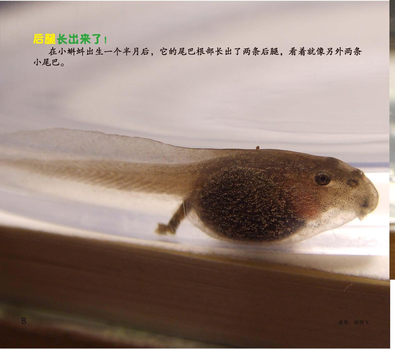 快翻翻这本书,看看不同的动物宝宝都是如何出生长大的吧!