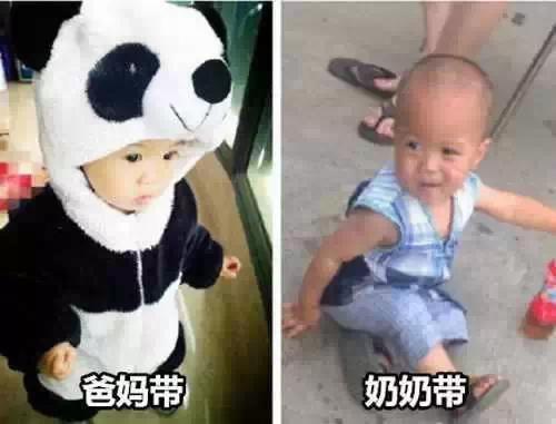 呆萌小熊猫一秒变村口放羊娃