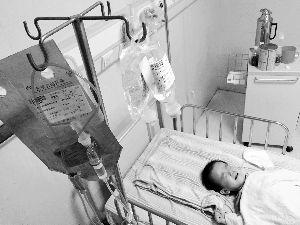 昨天下午,小毓富躺在病床上呻吟。    信息时报记者 萧嘉宁 摄