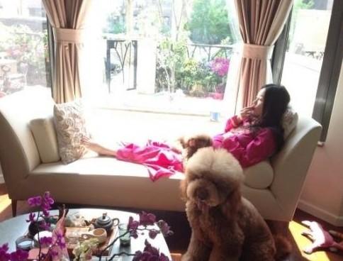 霍思燕怀孕大肚卧床爱犬陪伴。