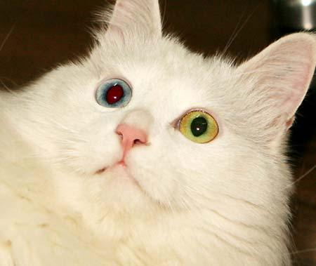 """宠物 >  领养中心 正文    有人要说:""""猫猫都懒懒的……"""",见过白牛牛"""