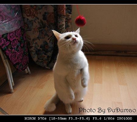 606688839_... 玩球教案_小猫玩球作文_快步热图_快步摄影信息网