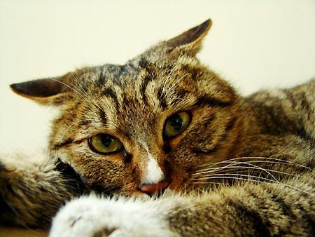 虽然飞机耳是猫都会,但要做的标准也不容易哈
