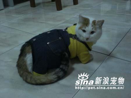 组图:猫猫美眉也爱穿衣服