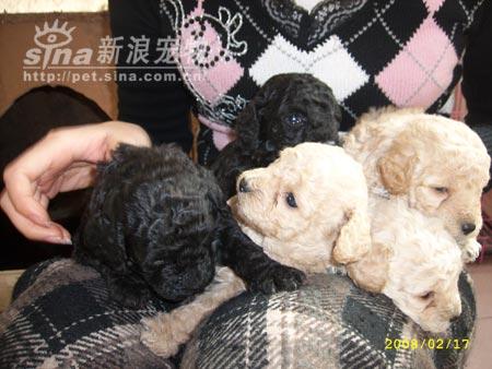 组图:刚出生的可爱狗宝宝(2)