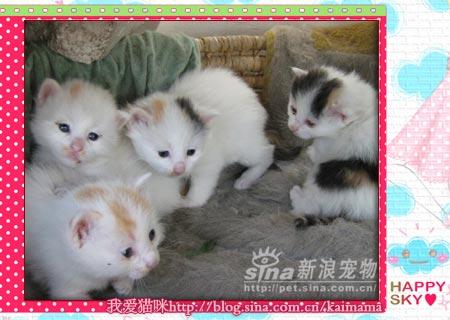 小猫出生刚刚半个多月-猫咪黄点和她的孩子 2图片