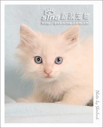 壁纸 动物 猫 猫咪 小猫 桌面 363_450 竖版 竖屏 手机