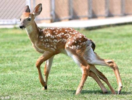 什么怪物动物有六腿手七双手一个尾巴