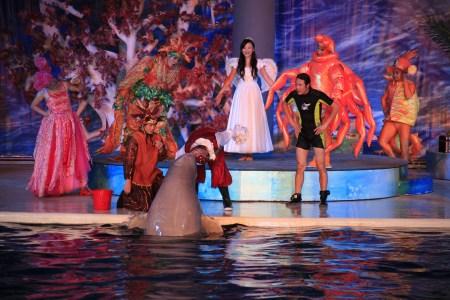 海洋动物明星出演舞台剧《藏宝箱的秘密》