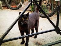 实拍:以色列充满灵性的漂亮猫咪