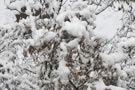 龙年春天的雪绒花