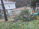大风刮倒树枝压弯栅栏