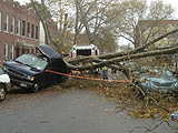 实拍飓风后纽约街头惨状