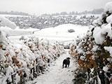 瑞士深秋突降2012第一场大雪