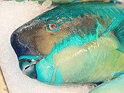 你吃过如此绿的鱼么?