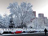 朝阳:京城春雪力压雾霾