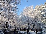 海淀:雪嫌春色晚穿庭作飞花