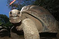 亚伯拉达象龟