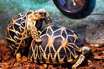 家有龟龟初成长