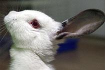 我的兔小兔真可爱