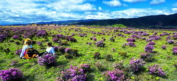 诗情画意的香格里拉草原