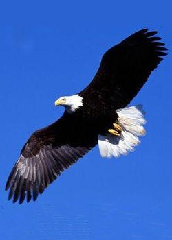 """自由翱翔的""""潘帕斯雄鹰"""""""
