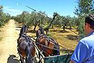 西班牙乡下马车有情趣