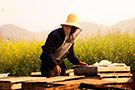 实拍云南罗平养蜂人