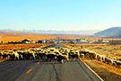西藏大美景色在路上
