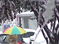 行人打伞穿行在雪林中