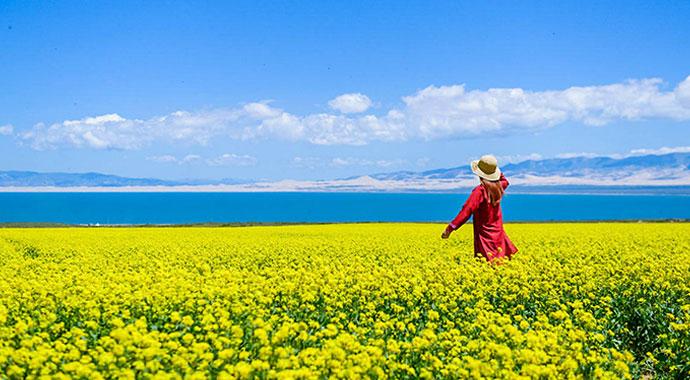 去青海湖看最美的油菜花