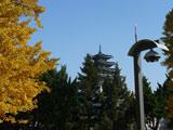 青松银杏掩映的国立古宫博物馆
