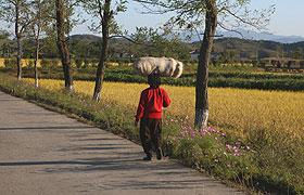 头顶物品是朝鲜妇女一大特色