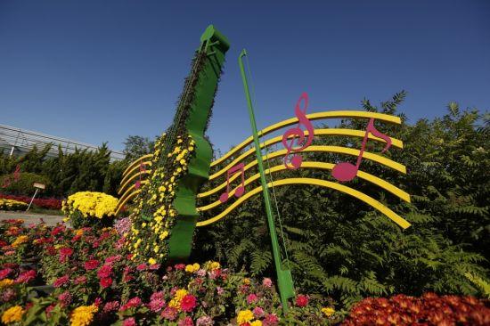 本次艺菊展共包含12组绿雕造型景观,景观由各种植物扦插而成,其中以各色小菊为主,配以红草、银叶菊、绿叶粉海棠、红叶红海棠、白色佛甲草、黄色反曲景天和麦冬草等,合计扦插面积约500多平方米。与往年不同的是,每组景观均由多个绿雕造型构成,并加入了各种铁艺造型,使游客能够自然融入景观所营造的氛围之中,体会和感受到不同绿雕景观背后所传递出的不同的寓意。12组景观都紧扣音乐这个主题,更加注重整体气氛的营造。位于南门入口凡尔赛广场中轴路两侧的绿雕景观悦动的音符,用盛放的菊花载满了秋天的热情,通过列阵式的布置