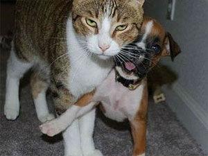 主人遭猫挟持慌张报警