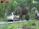 实拍印度大象趁游客自拍偷包 吞下包内物品