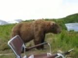 真危险!摄影师野外遭遇灰熊近距离冒死拍摄