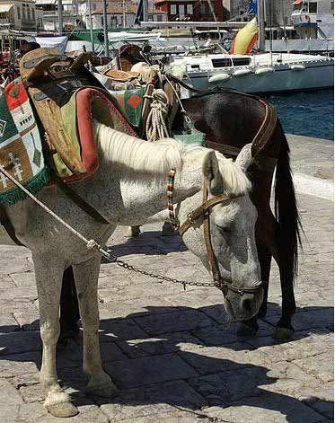 码头边的驴