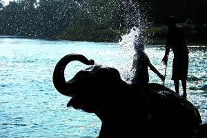 奇特旺公园里的大象洗澡活动。