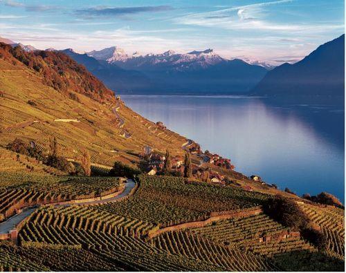 日内瓦湖畔的拉沃葡萄园