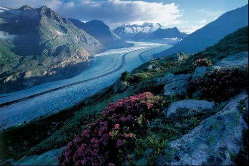 阿莱奇冰川