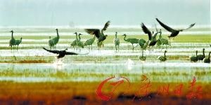 如果在丽江遇见你,一定带你去观鸟。