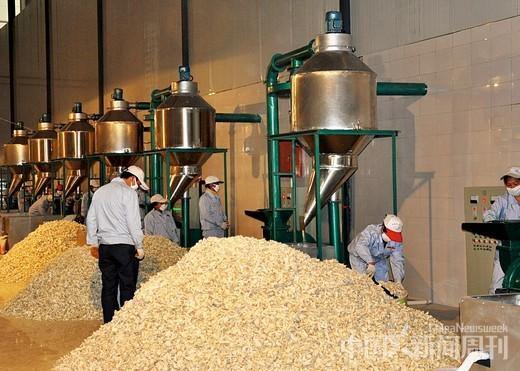 岚皋县一家魔芋加工厂的车间。魔芋产业目前已经是岚皋县的四大支柱产业之一。